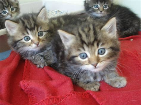Spa chaton a donner - Annonces chatons